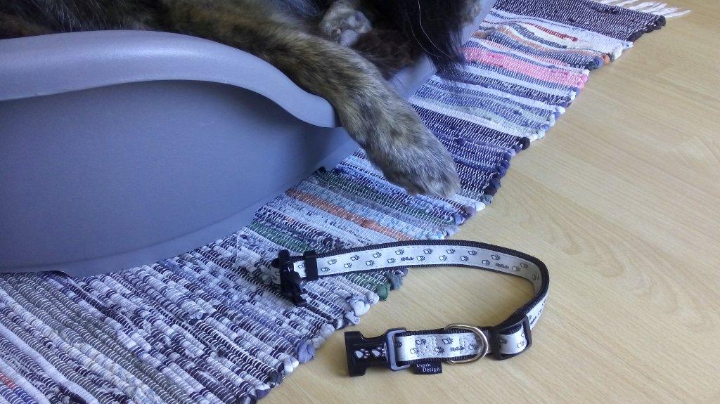 DipthDesign Hundehalsband Shop Hundehalsband immer anlassen