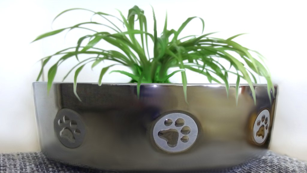 DipthDesign Hundehalsband Shop Warum fressen Hunde Gras