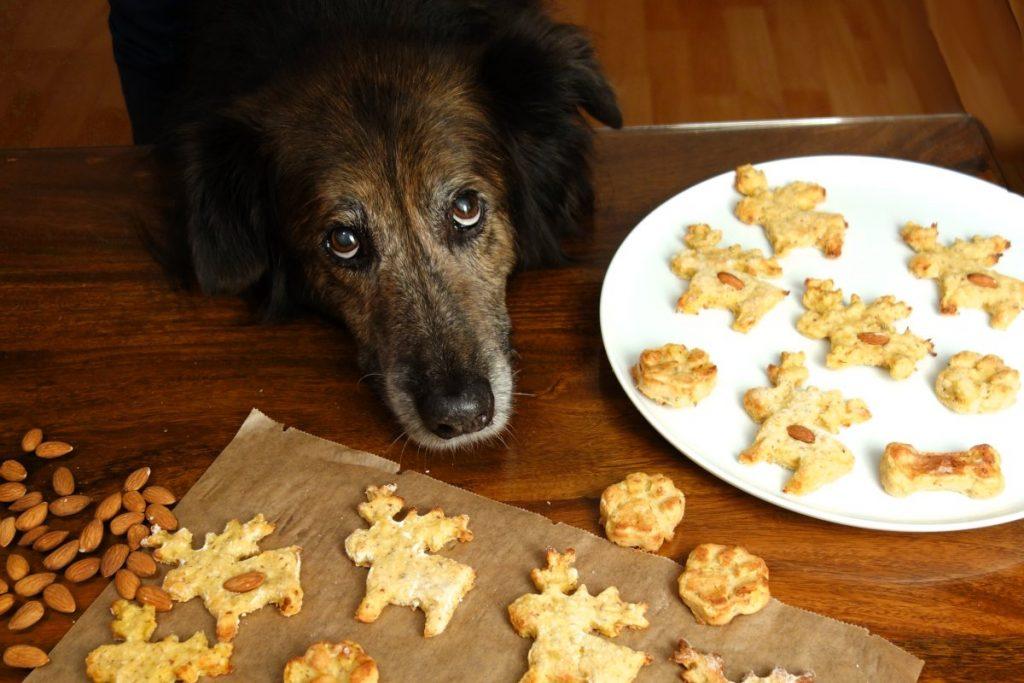 Weihnachts-Plätzchen für Hunde – Rezept zum selber machen