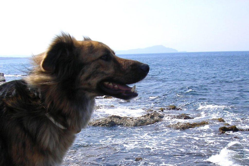 Willkommen im DipthDesign Hundehalsband-Shop