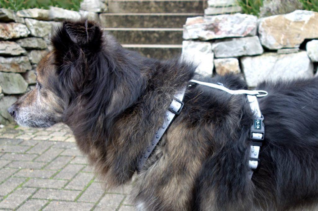Hundehalsband oder Geschirr