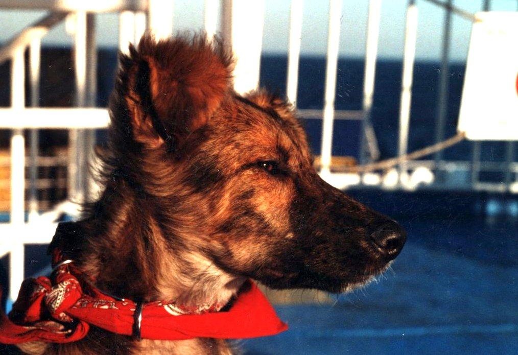 Filos Steckbrief – ein Straßenhund aus Griechenland