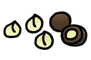Was darf der Hund nicht fressen - Macadamia