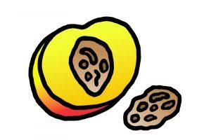 Was darf Hund nicht fressen - Obstkerne