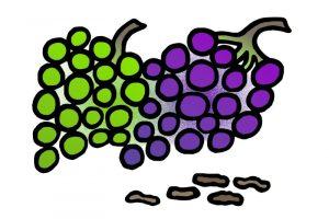 Darf der Hund Weintrauben fressen?