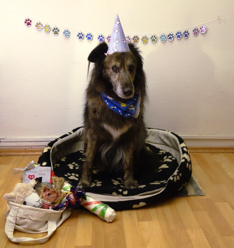 DipthDesign Hundehalsband Shop Hunde-Geburtstagsparty Filos mit Hut