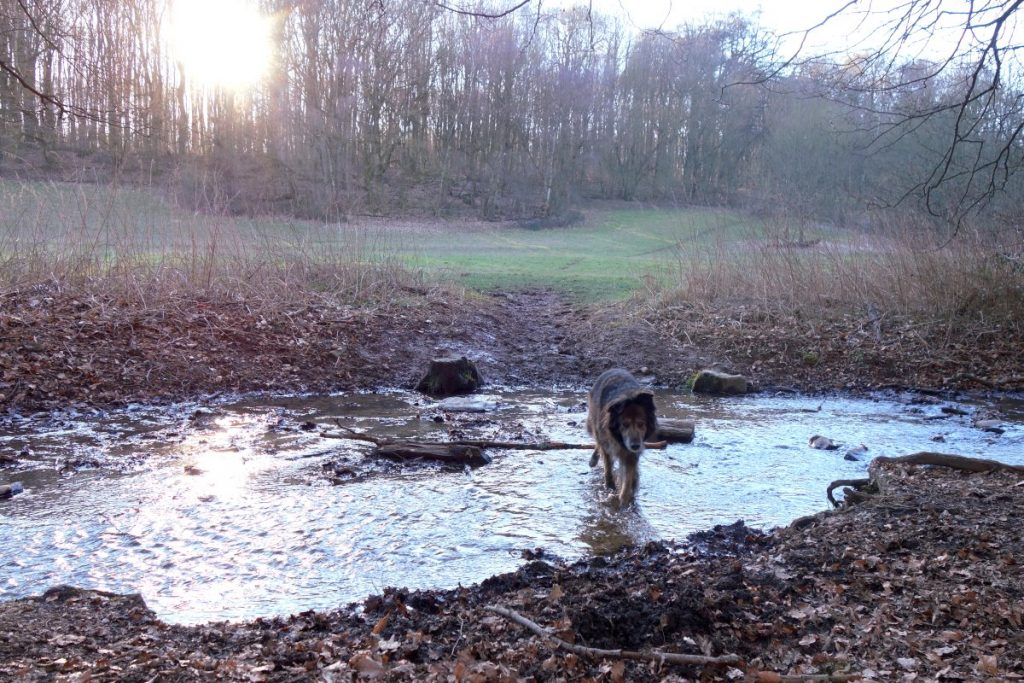 DipthDesign Hundehalsband Shop Hunde-Geburtstagsparty Abenteuerwanderung mit Hund
