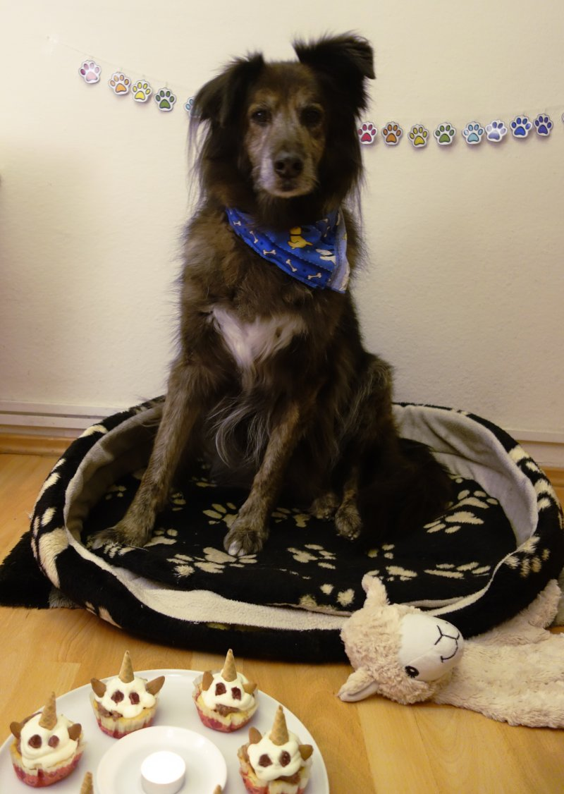 DipthDesign Hundehalsband Shop Hunde-Geburtstagsparty Filos wird 14
