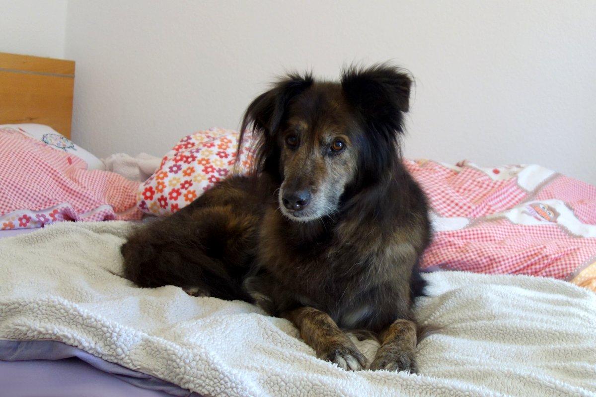 DipthDesign Hundehalsband Shop - Darf der Hund im Bett schlafen?