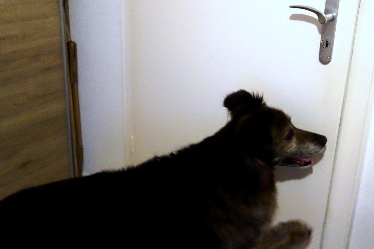 DipthDesign Hundehalsband Shop - Trick: Mach die Tür zu