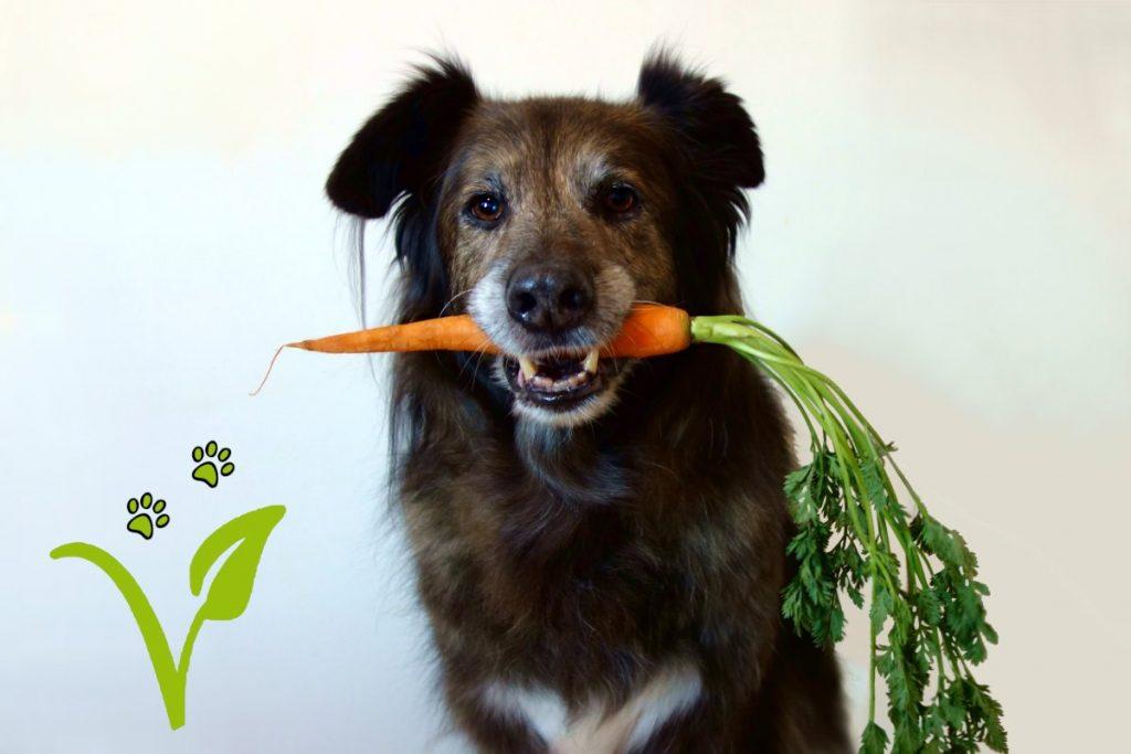 DipthDesign Hundehlasband Shop - Veganes Hundefutter