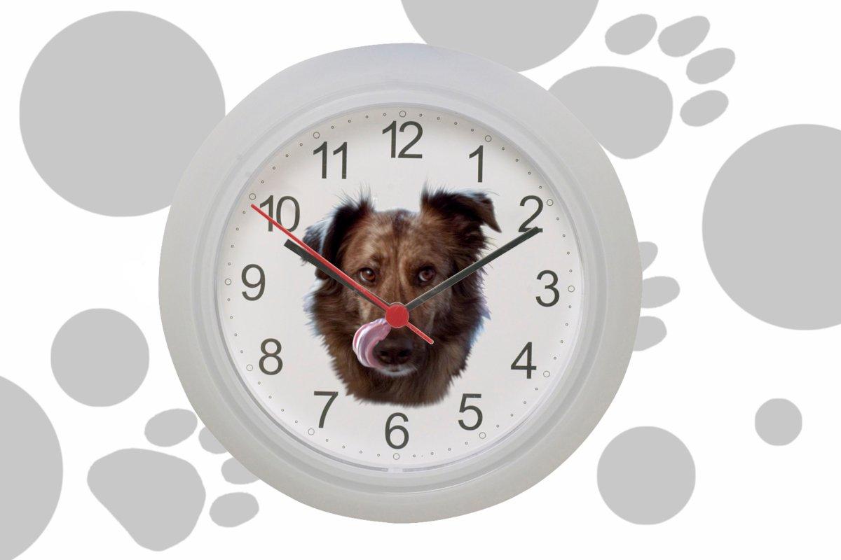 DipthDesign Hundehalsband Shop - Wann den Hund am besten füttern?