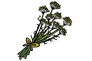 DipthDesign Dog Collar Shop - Which herbs are good for dogs - fennel