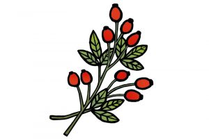 DipthDesign Dog Collar Shop - Which herbs are good for dogs - rosehips