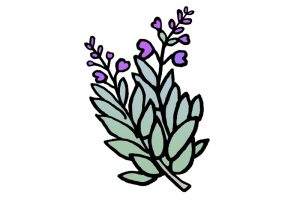DipthDesign Dog Collar Shop - Which herbs are good for dogs - sage