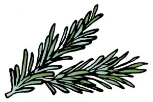 DipthDesign Dog Collar Shop - Which herbs are good for dogs - rosemary