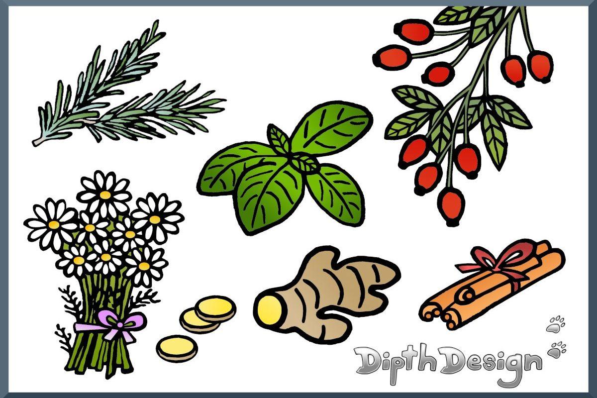 DipthDesign-Hundehalsband-Shop - Welche Kräuter für Hunde ?
