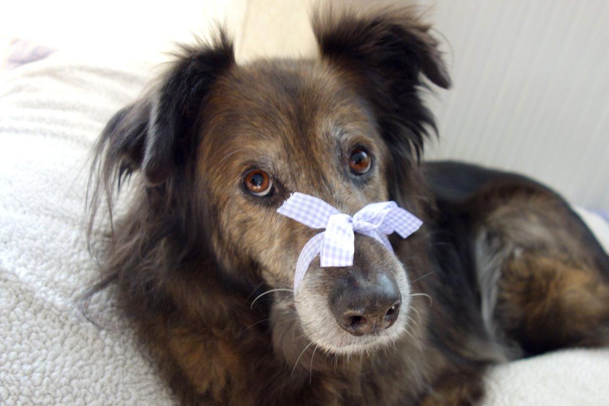 DipthDesign Hundehalsband Shop - Wie kann ich dem Hund das Bellen abgewöhnen?