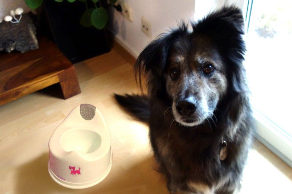 DipthDesign Hundehalsband Shop - Wie wird mein Hund stubenrein?