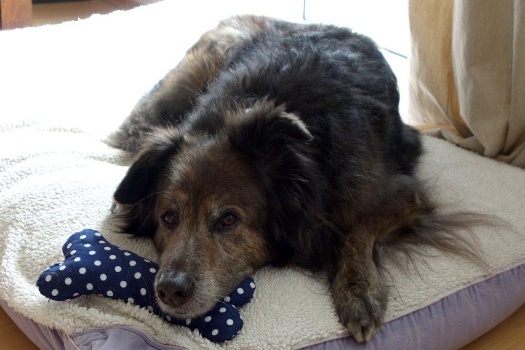 DipthDesign Hundehalsband Shop - 7 Zeichen dass Hunde sich wohl fühlen