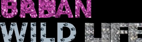 Hundehalsband Design