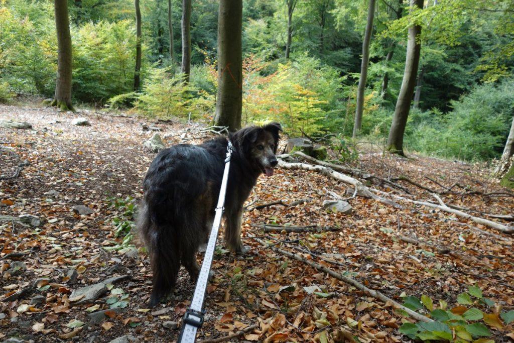 Wandern mit Hund Ausrüstung Liste