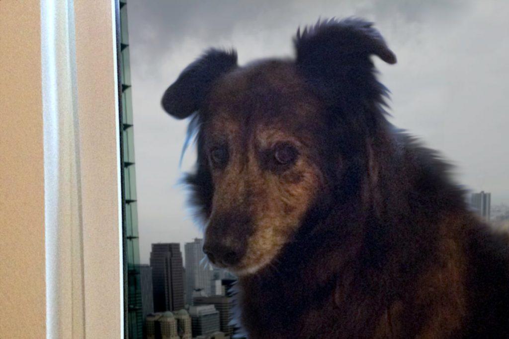 Hund hat Angst vor Gewitter